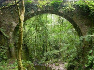 A ponte e a floresta