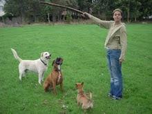 CANGUR DE MASCOTES The Nanny Pet     thenannypet