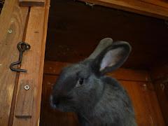 Bunny le lapin mascotte