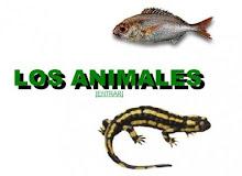 CLASIFICA OS ANIMAIS