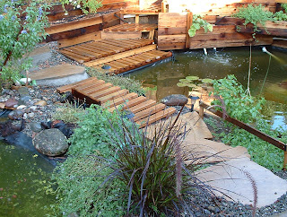 Backyard biology a backyard aquaponic pond system for Aquaponics pond