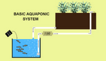 Very Basic Aquaponic System