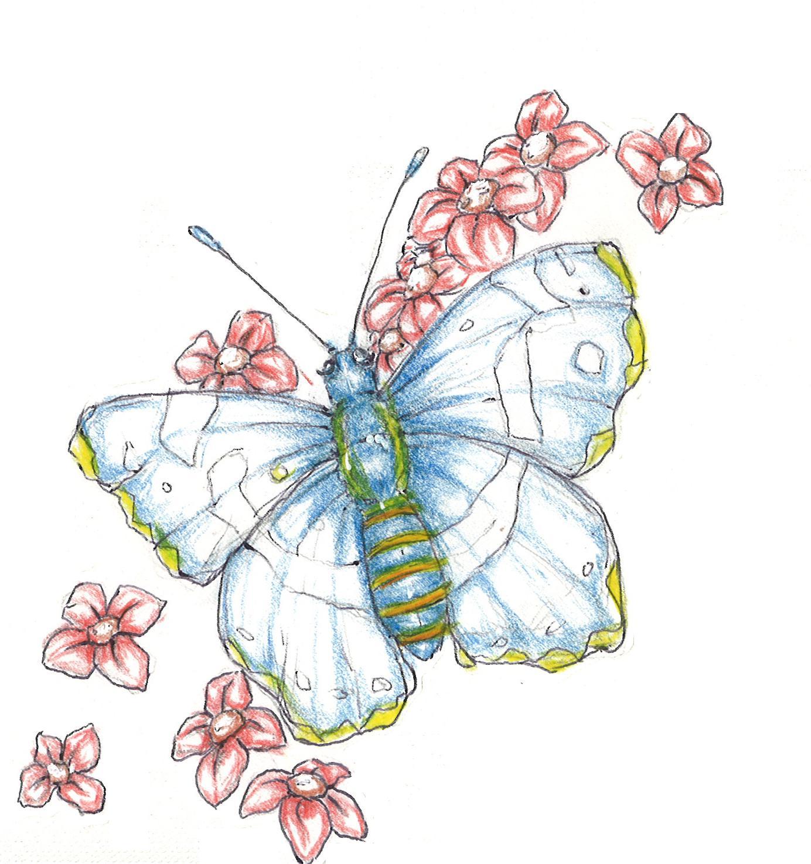 Ausmalbilder besonderer Schmetterling Tiere zum  - Schmetterling Bilder Ausmalen