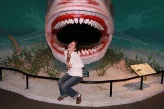 [shark+mel]