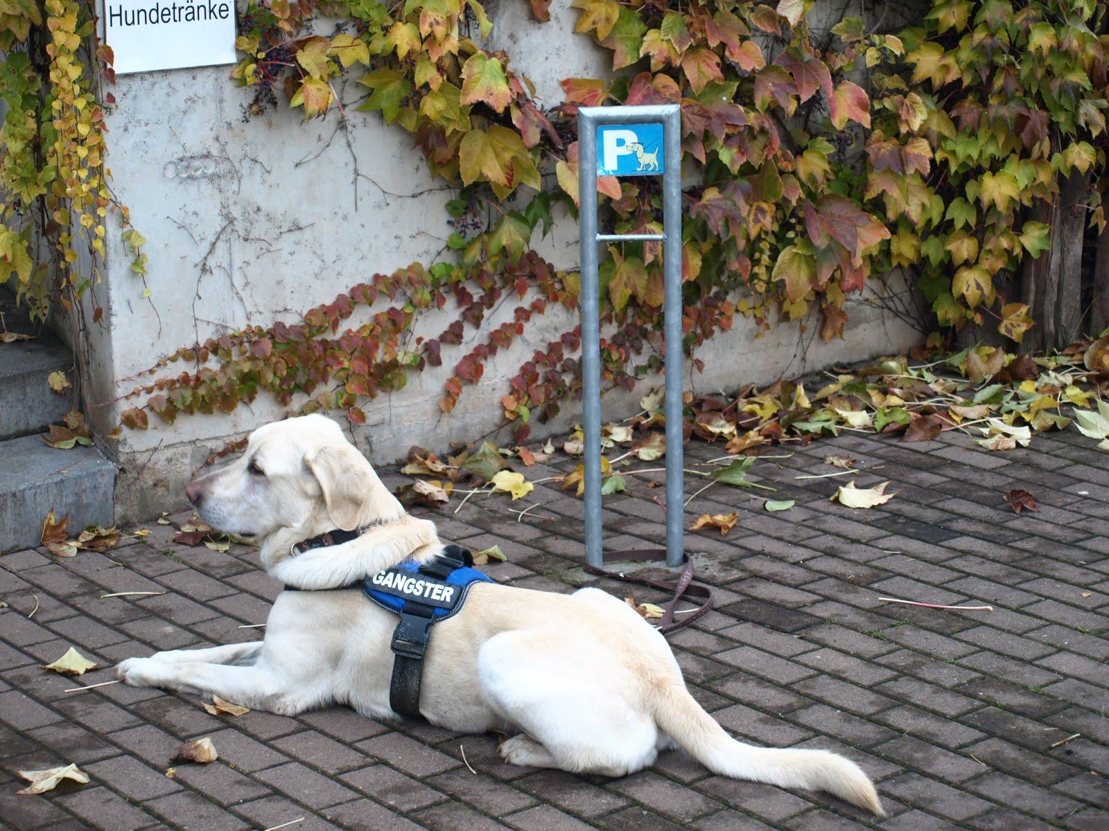 Hauptsache, es schmeckt!: Der Zoo in Erfurt – Nach der Renovierung ...