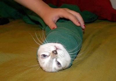http://2.bp.blogspot.com/_NOXa1CXNsxg/SUjfwZeeo4I/AAAAAAAADsU/g43OJ-ioEMc/s400/cat+stuck+in+a+sweater.jpg