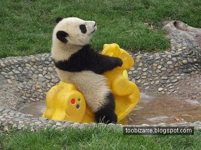 http://2.bp.blogspot.com/_NOXa1CXNsxg/Sq9CJw7FILI/AAAAAAAAEcI/-hO0aAyhlQc/s400/funny-panda.jpg