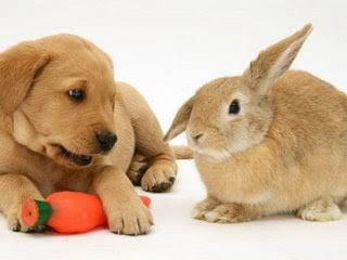 Puppies Bunnies on The Funny Puppy In This Picture Is Thinking  Back Off   Get Your Own