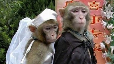 Married on Kitchen Monkey  Kitchen Monkey Getting Married   And Restaurant Daniel