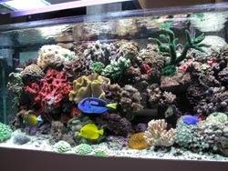 SALTWATER AQUARIUM SETUP: Saltwater aquarium setup