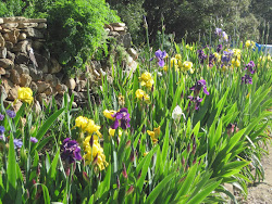 Part of Iris Alley