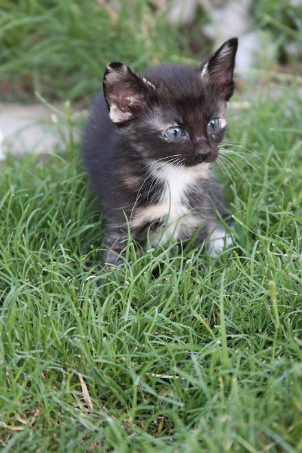 Stocking kitty