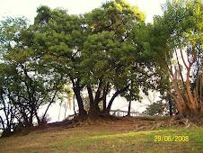 Arboreando en Parque Lezama