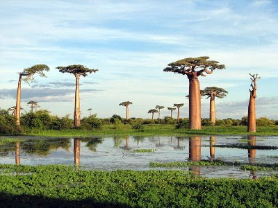 Madagascar Might Be A Great Place To Visit... But Not This Month