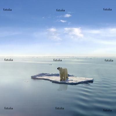polar bear jegesmedve