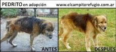Antes - Después: adoptá a Pedrito