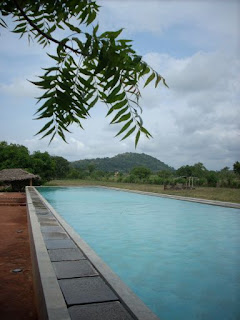 thilanka hotel and spa dambulla sri lanka pool in paddy field with branches / leaves in foreground