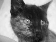 Katten Smilla