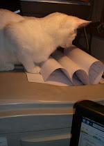Nelson, The Printervisor