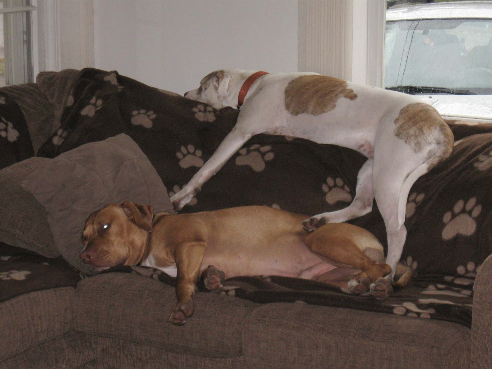 Go Back > Gallery For > Couch Potato Dog
