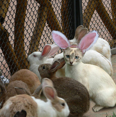 Rabbit Party with Cat Funny Photo