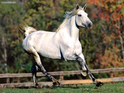Best Horse Walls