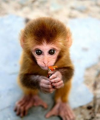 Cute Baby Monkey Pics