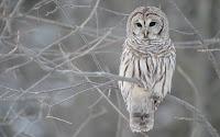 Owl Desktop Free
