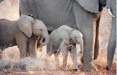 Baby Animals Photo Video Pics