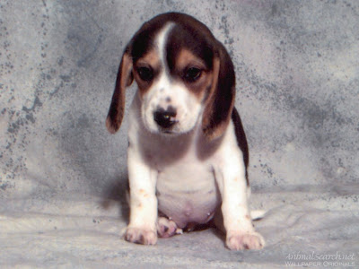 Dogs - Cute Puppy Picture
