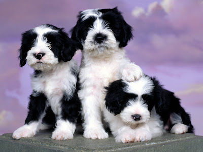 Cute Puppies Pics - Animals Video