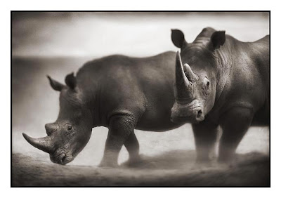 Two Rhinos Photograph