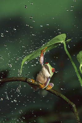 Amazing Animals - Frog Photograph