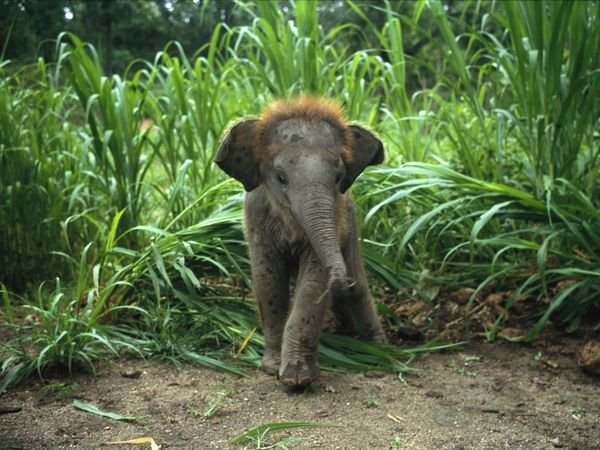 South african baby animals - photo#16
