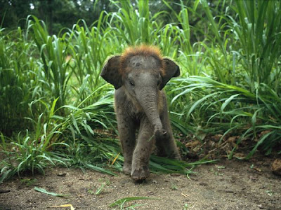Baby African Elephants Picture