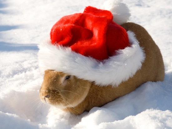 funny-animals-christmas-picture.jpg