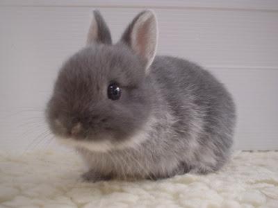 Innocent Baby Animals Cute Pics
