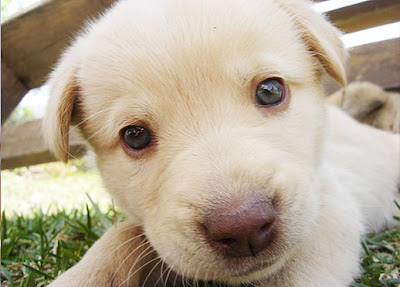 Beautiful Innocent Puppy Photo