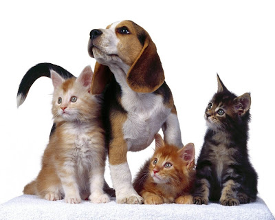 Dogs & Cats Wallpaper Free