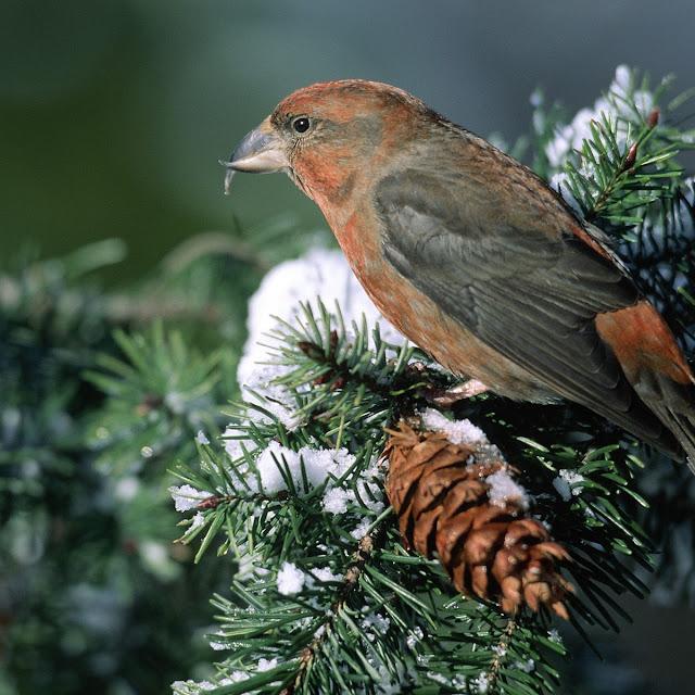 gambar burung-burung cantik