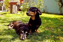 Lukas y Teo
