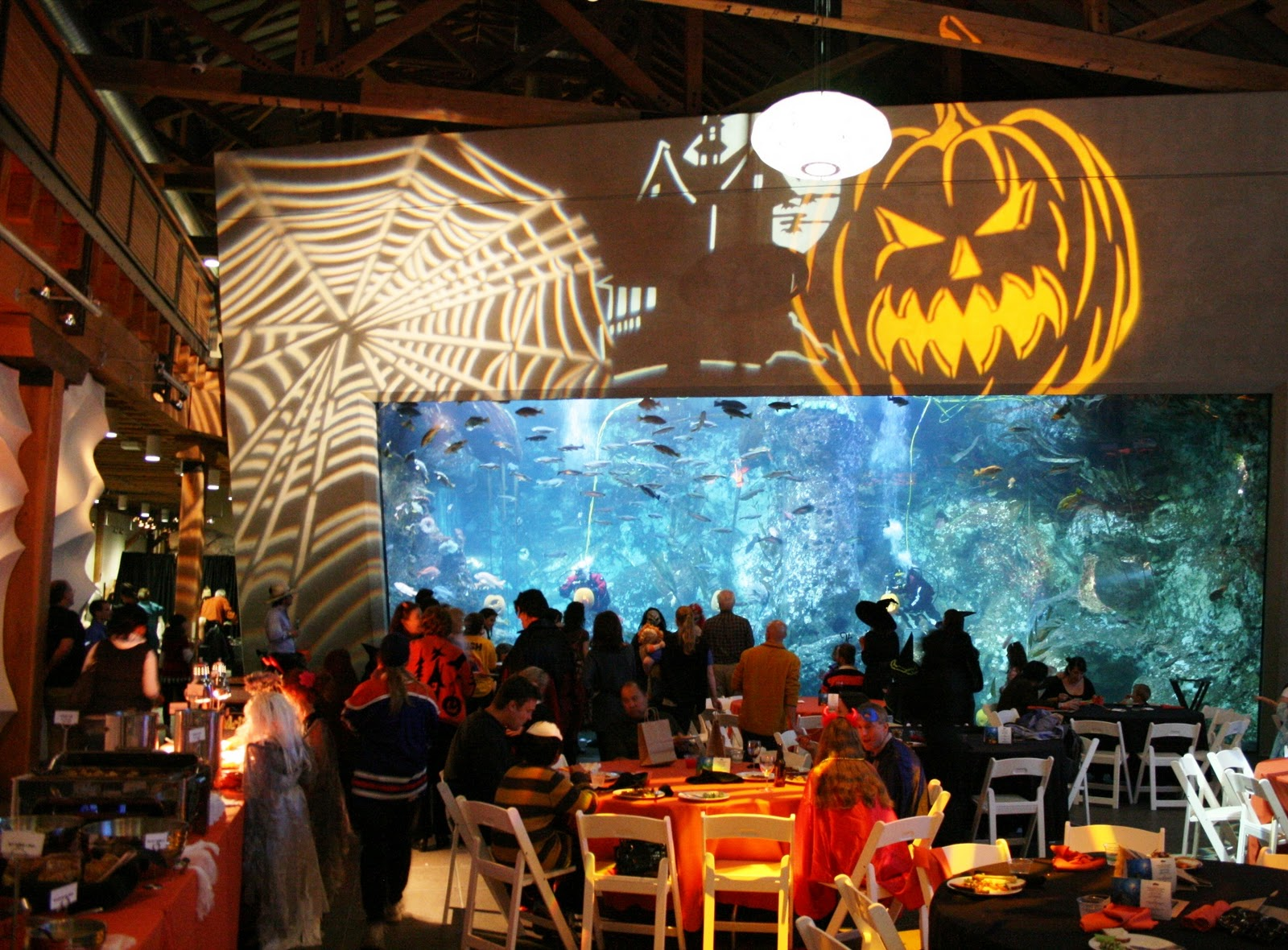 seattle aquarium at night: happy halloween!