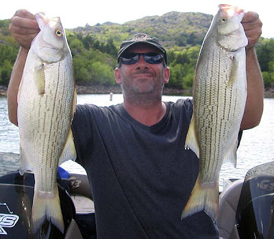 Oklahoma fishing report, Lake Tom Steed, Hybrids on Lead Babies Slabs.
