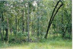 3. ป่าไม้