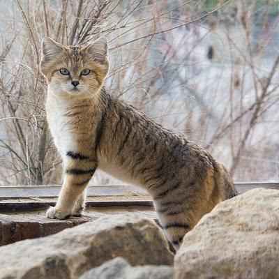 Foto Jenis Kucing Peliharaan Jenis Kucing Peliharaan Ya