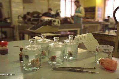 pabrik organ tubuh