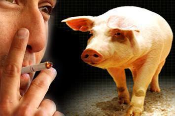 Filter Rokok Diindikasi Memiliki Campuran Darah Babi