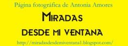 Página de Antonia Amores