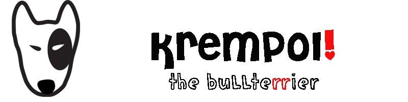 Bullterrier Krępuś