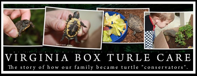 Virginia Box Turtle Care